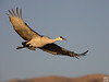sandhill cranes' air show in the morning, crane pool