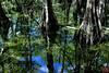 Kirby Storter Boardwalk, Big Cypress National Reserve