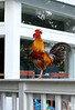 Sound of Rooster, Key west, lots of them wandering around