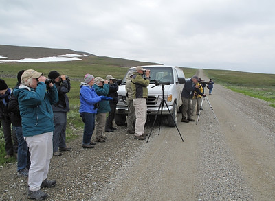 Birdwatching in Nome, AK photo by: Julie O'Neil