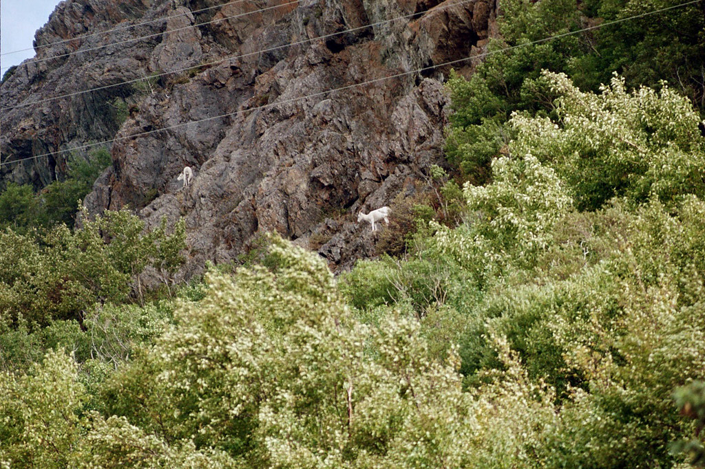 Day 1: Driving the Seward Highway from Anchorage to Seward. Dall Sheep.