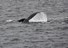 Breaching tail fin