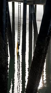 Yellow Kelp- Wrangell, AK