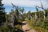 Skyline Trail