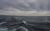 Loveboat Whale Watch