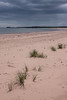 Panmure Island Beach