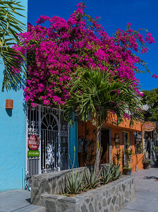 Colors of Todos Santos