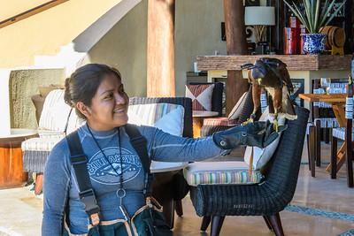 "The Falcon Keeps ""Pest Birds"" Under Control"
