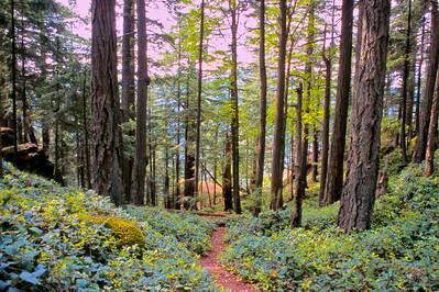 Forest, Salt Spring Island, Canada, 2003