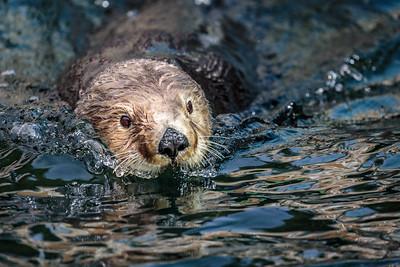 Vancouver Aquarium, Vancouver, British Columbia, 2017