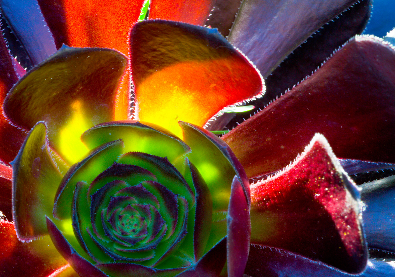 Illuminated Succulent