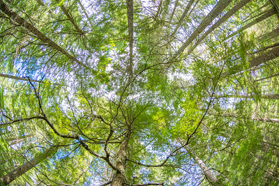 Canopy Look up