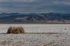Soda Lake, Mojave National Preserve