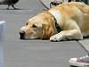 Dog's Life, Embarcadero