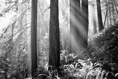 Hillside Redwoods- Stewart's Pt. Road, CA