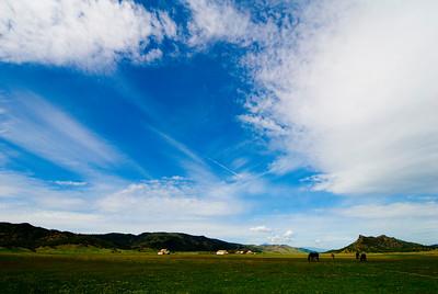Horses & Barns- CA