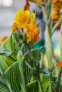 Floral display, Parc de La Presse