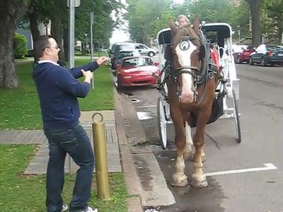 phil_horse