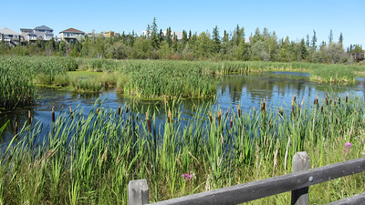 niven_lake_trail_11