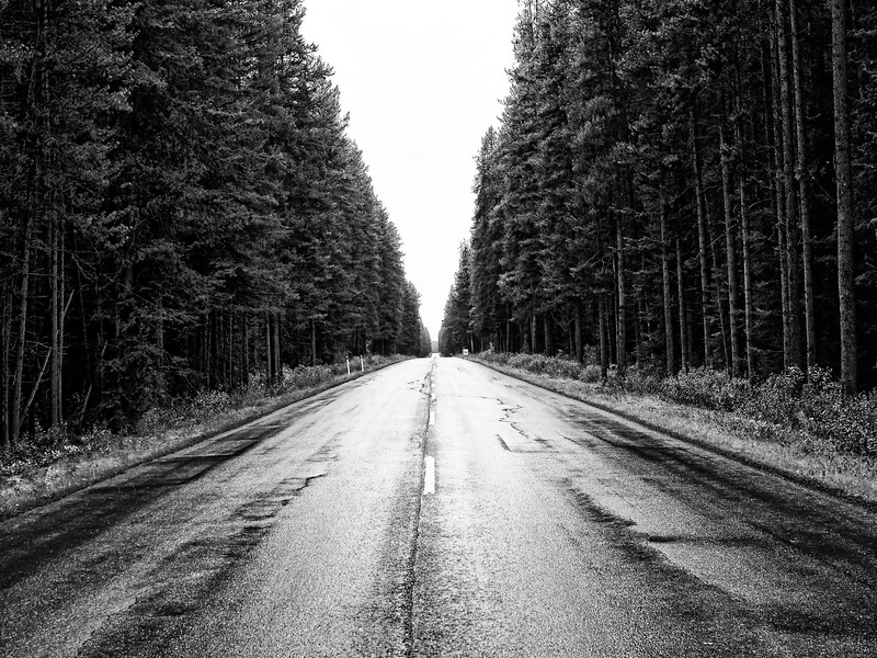 Lodgepole Road