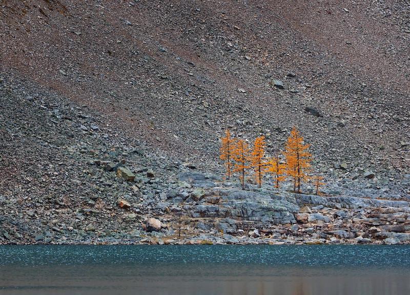 Trees among the rocks