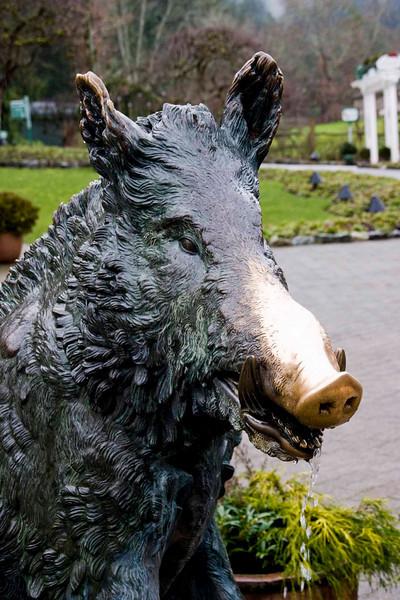 Wart Hog - Butchart Gardens