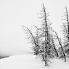 Along the Continental Divide at Wolf Creek Ski Area, Colorado.