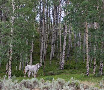 Aspens and Horses I