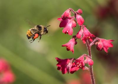 Pollen Sac
