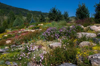 Planted Hillside