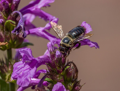 Bee,  Longwood Gardens, PA, 2007