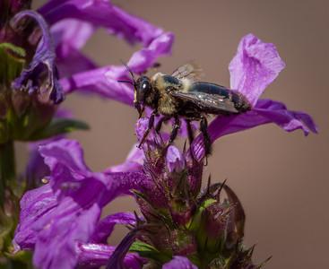 Bee II,  Longwood Gardens, PA, 2007