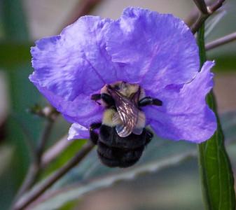 Finding Pollen,  Longwood Gardens, PA, 2007
