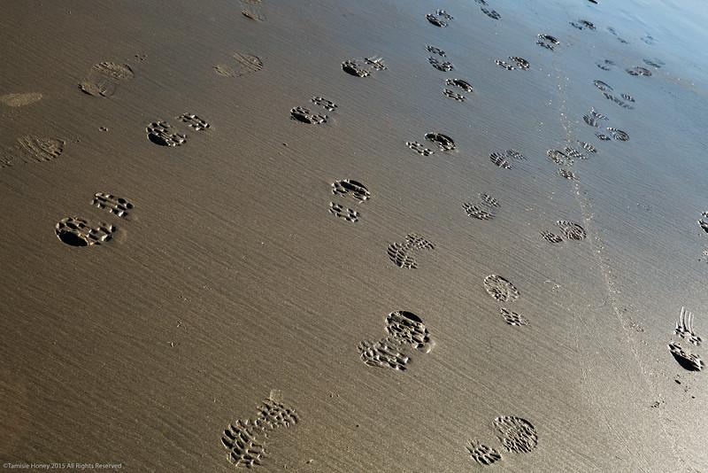 Family  imprints