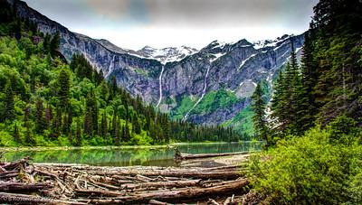 Treefall, West Glacier NP, Montana, 2006