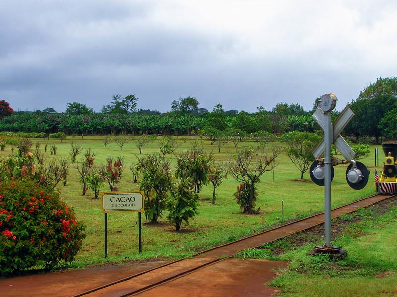 The Dole Plantation on Oahu.