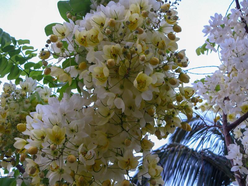 Flowers in Waikoloa.