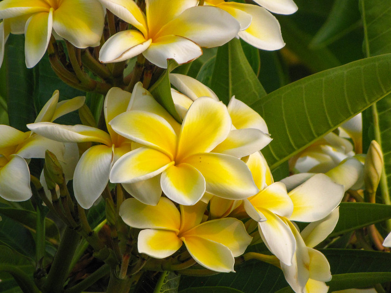 Gardens at the Waikoloa Beach Marriott Resort & Spa.