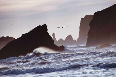 Seagull and rocks off Bandon, Oregon