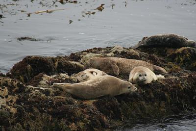 Monterey trip