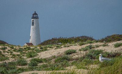 Gulls Nest near Nantucket Light