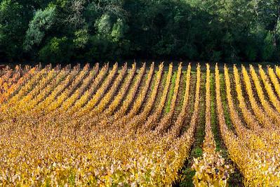 Silverado Vineyard- St. Helena, CA