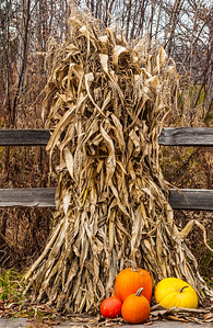 Harvest Season - Vermont
