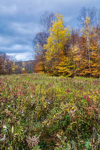 Vermont Meadow - Fall