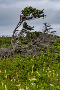 Wind Effects on the Coastal Trail - Gros Morne National Park