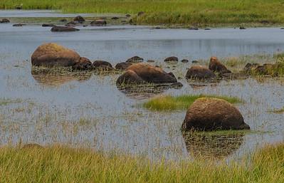 Rocky Inland Marsh