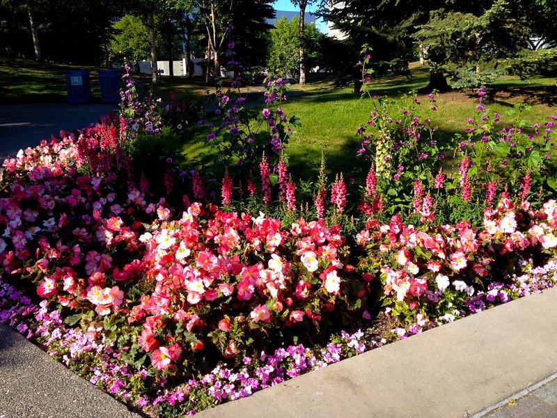 Flowers in full bloom in Anchorage!