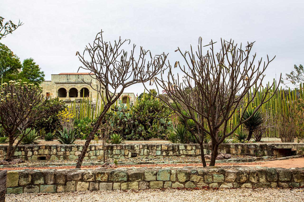 Ethnobotanical Garden, Oaxaca, Mexico, 2016
