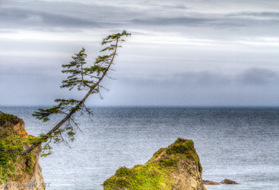 Cape Arago, Oregon, May, 2012