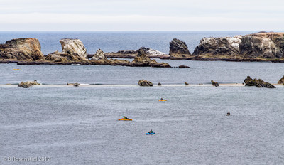 Cape Arago Kayaks, Charleston, Oregon, May, 2012